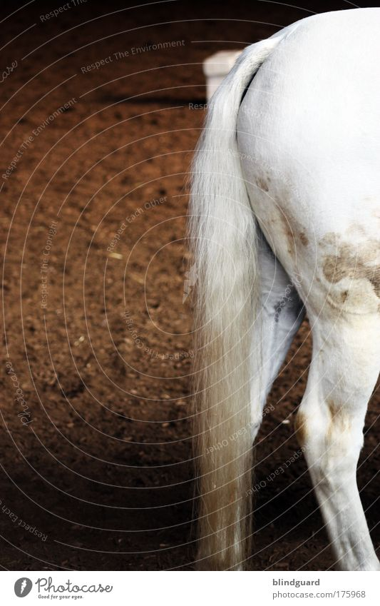 White Animal Legs Brown Dirty Elegant Horse Bottom Hind quarters Gray (horse) Patch Pet Tails Ride Thigh Farm animal