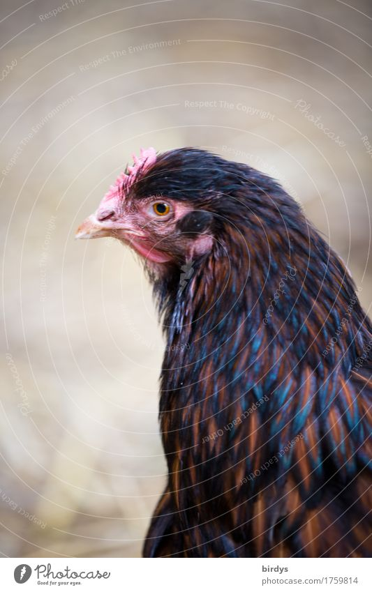 Nature Animal Life Feminine Healthy Contentment Esthetic Observe Friendliness Curiosity Agriculture Serene Organic produce Positive Forestry Barn fowl