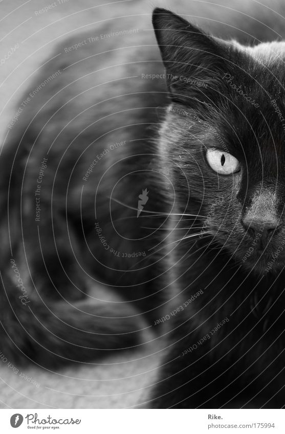 Nature Beautiful Calm Black Animal Dream Sadness Cat Moody Cool (slang) Might Animal face Threat Lie Observe Wild