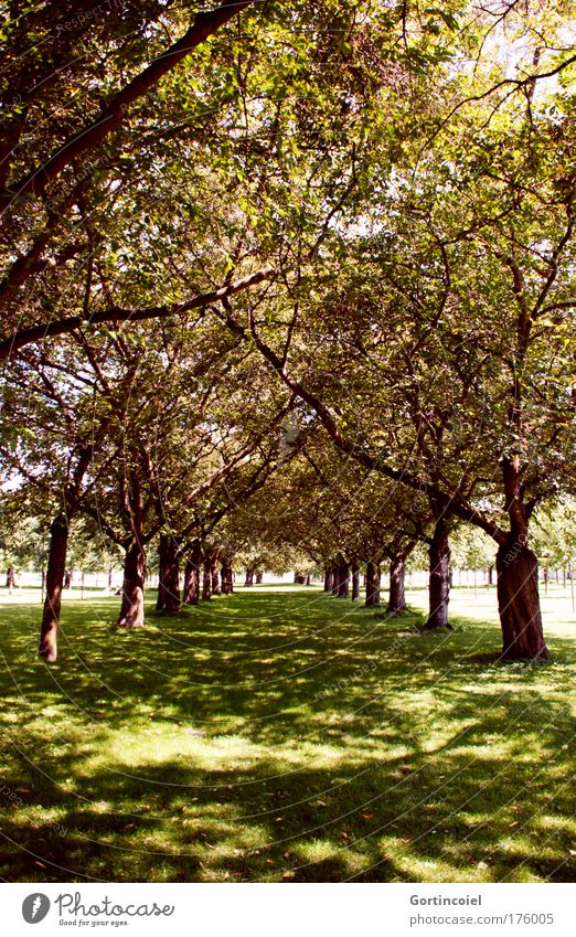 avenue Colour photo Exterior shot Day Light Shadow Sunlight Sunbeam Environment Nature Landscape Summer Tree Avenue Garden Park Meadow Forest Discover Going