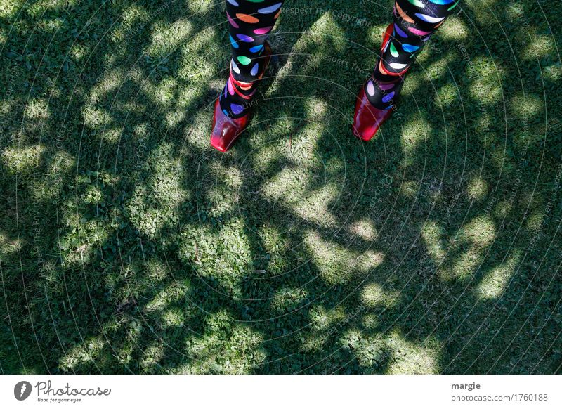 Pinpoint landing: Girl - legs with coloured dots on the stockings standing on a meadow under a tree Feminine Woman Adults Legs Feet 1 Human being Nature Earth