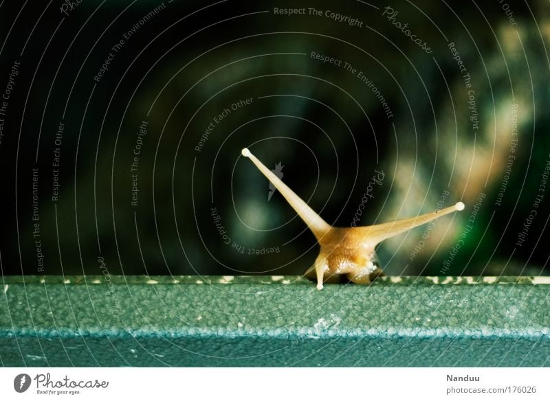 Nature Joy Animal Happy Brown Environment Success Crazy Infinity Natural Curiosity Cute Bizarre Snail Optimism Slowly