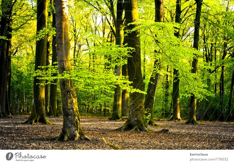bright summer forest Nature Beautiful Tree Green Plant Summer Yellow Forest Wood Landscape Brown Elegant Environment Energy Bushes Climate
