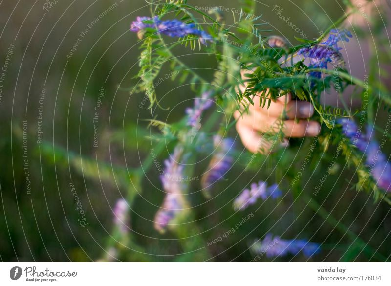 weeds Multicoloured Exterior shot Close-up Copy Space left Blur Shallow depth of field Arm Hand Fingers Environment Plant Flower Grass Fragrance Simple