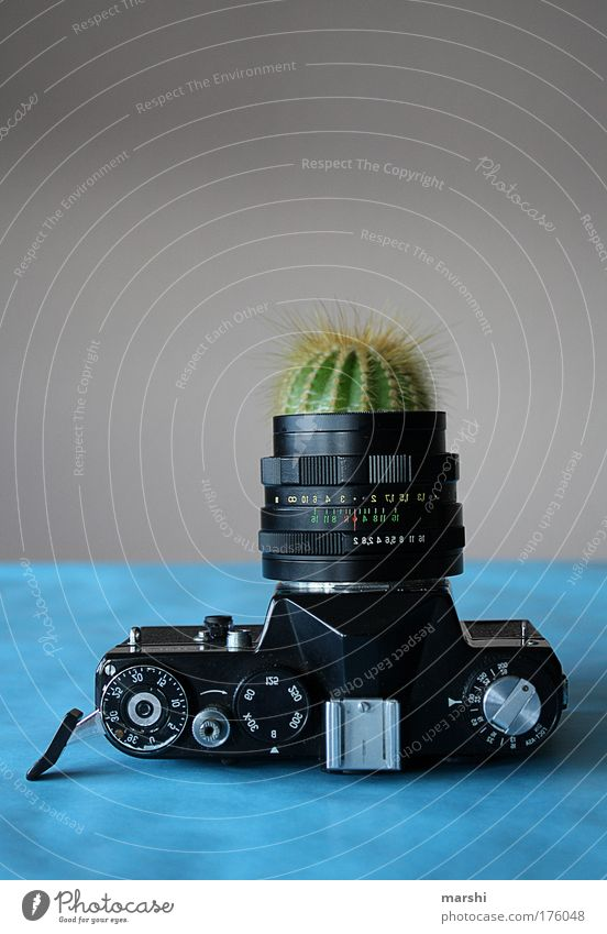 Old Green Blue Plant Growth Leisure and hobbies Camera Profession Analog Take a photo Vase Cactus Work of art Objective