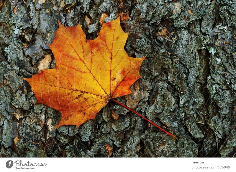 Nature Old Tree Colour Leaf Black Calm Environment Yellow Autumn Gray Sadness Park Time Gold Natural