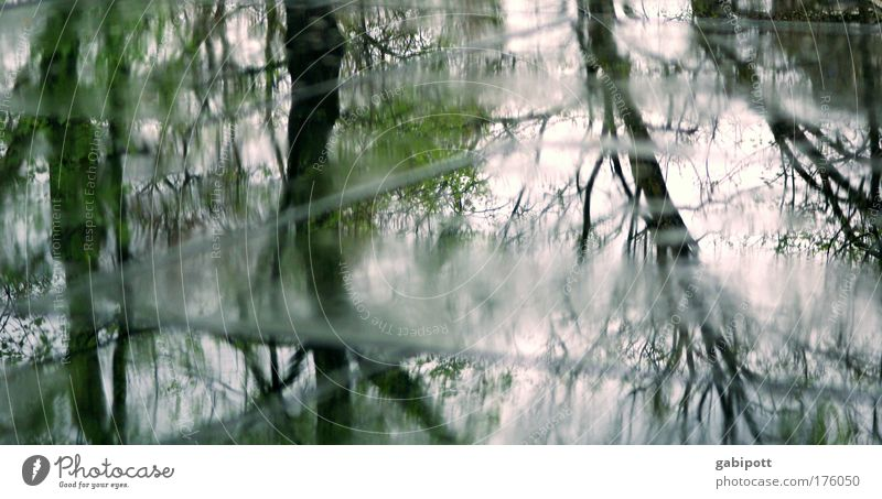 Tree Street Dark Cold Gray Rain Weather Wind Glittering Wait Wet Drops of water Gloomy Grief Branch Asphalt