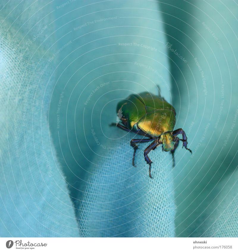 Nature Animal Crazy Wild animal Turquoise Beetle Textiles Dazzling