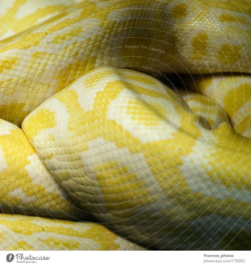 serpentines Colour photo Multicoloured Bird's-eye view Animal portrait Rear view Environment Nature Earth Fire Wild animal Snake Scales Zoo Terrarium Snake skin