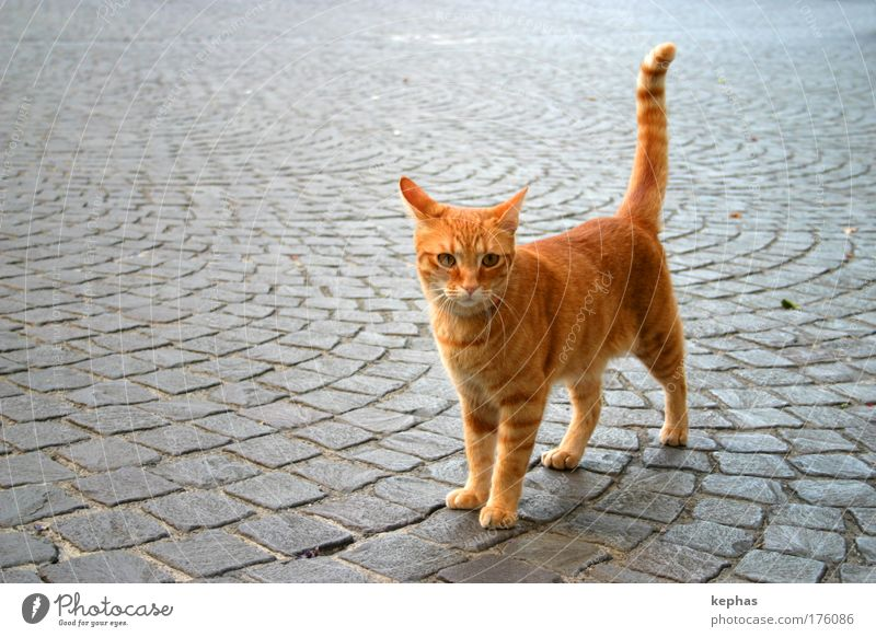 . .__/ Cat Town Places Animal Pet Pelt 1 Friendliness Cuddly Cute Soft Yellow Gold Red Colour photo Exterior shot Copy Space left Copy Space top Day