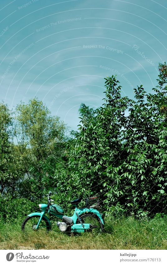 Nature Sky Tree Plant Calm Animal Grass Garden Landscape Air Environment Transport Lifestyle Bushes Leisure and hobbies Climate