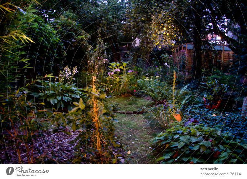 In the garden Garden Plant Tree Flower Bushes Moss Blossom Emotions Fairy tale Set Colour photo Exterior shot Evening Night Long shot Fantastic Surrealism