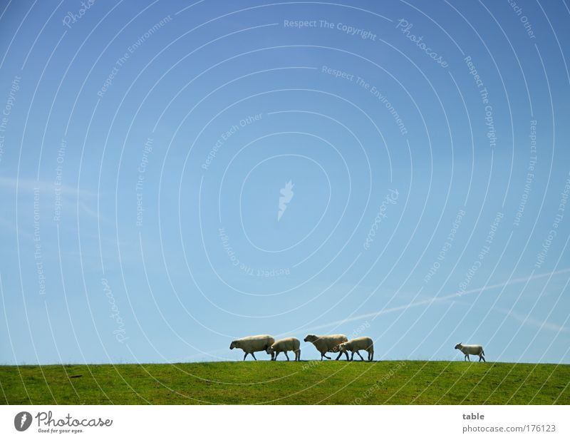 Nature Green Blue Plant Animal Grass Landscape Together Hiking Going Environment Walking Horizon Trip Group of animals Team