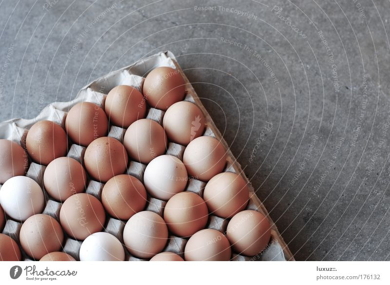 Food Fresh Egg Fragile Goods Packaging Hen's egg Egg carton