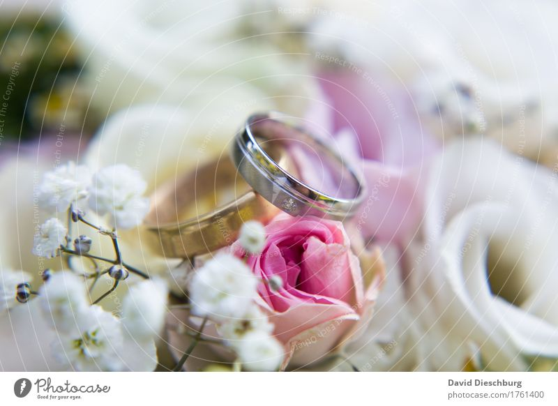 White Flower Blossom Love Happy Together Pink Glittering Romance Sign Wedding Violet Rose Bouquet Trust Infatuation
