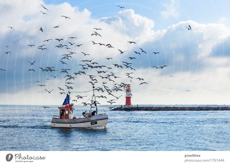 Fishing boat with seagulls Fisherman Fishery Fishing (Angle) Nature Landscape Water Clouds Horizon Weather Coast Baltic Sea Ocean Warnemünde Rostock Germany