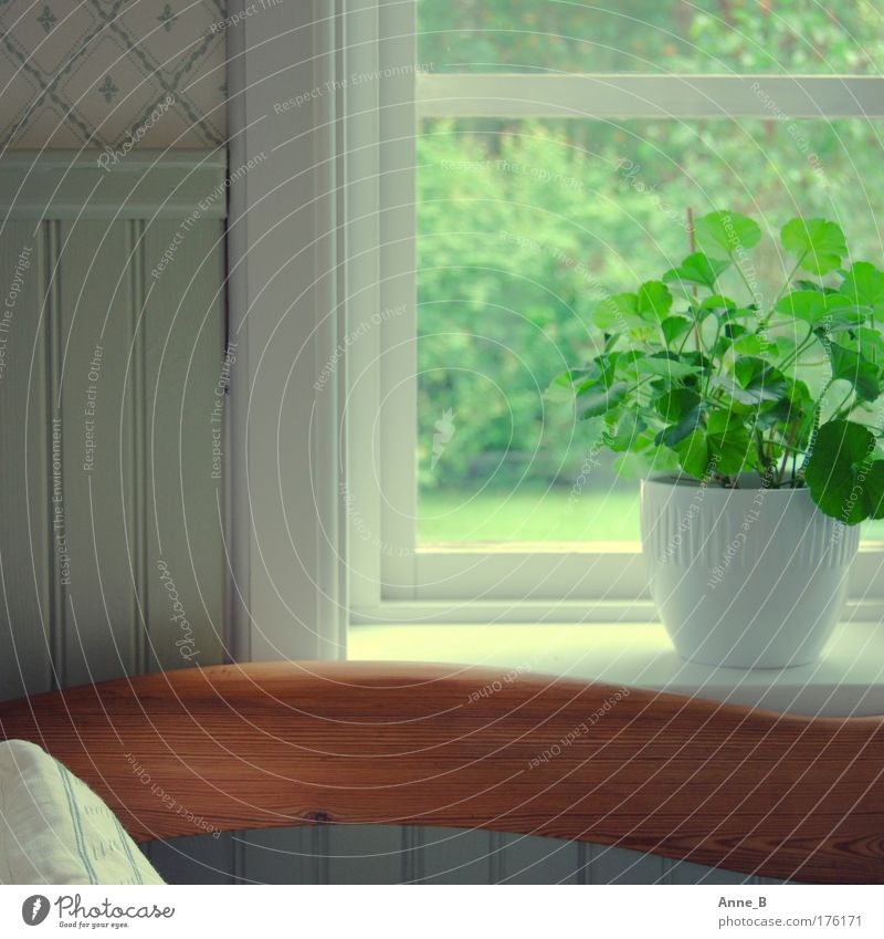 Harmony in green Foliage plant Pot plant Window Window frame Wallpaper Decoration Backrest Wood Line Esthetic Simple Beautiful Green White Calm Harmonious