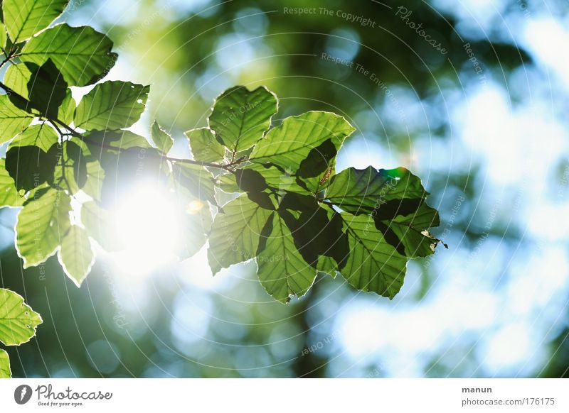 Nature Blue Green Tree Sun Summer Leaf Calm Relaxation Environment Spring Park Contentment Glittering Esthetic Illuminate