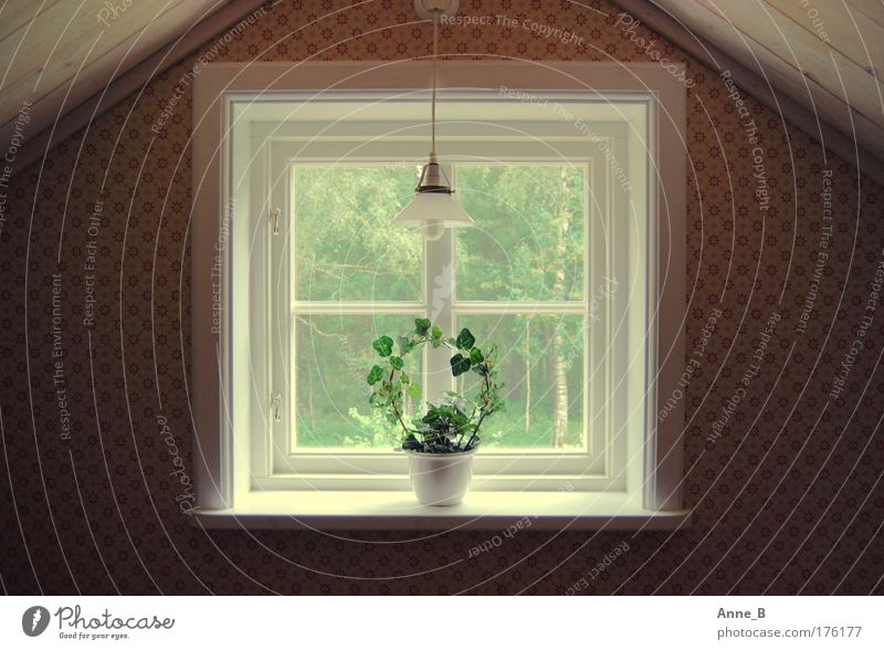 Swedish symmetry Living or residing Flat (apartment) Interior design Lamp Wallpaper Room Attic Foliage plant Pot plant Dream house Wall (barrier)