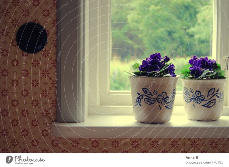 Blue White Green Beautiful Red Plant Flower House (Residential Structure) Calm Yellow Window Warmth Wood Blossom Garden Flat (apartment)