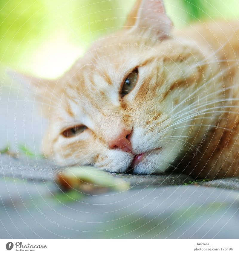Cat Beautiful Green Loneliness Relaxation Red Animal Yellow Warmth Sadness Brown Dream Head Masculine Gold Wait