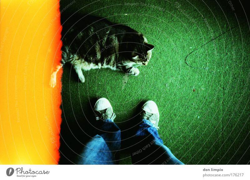 Cat Green Yellow Footwear Jeans Pet Carpet