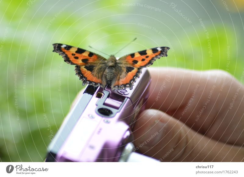 photo session Nature Field Animal Wild animal Butterfly 1 Sit Wait Elegant Natural Brown Orange Black Contentment Willpower Beautiful Concentrate