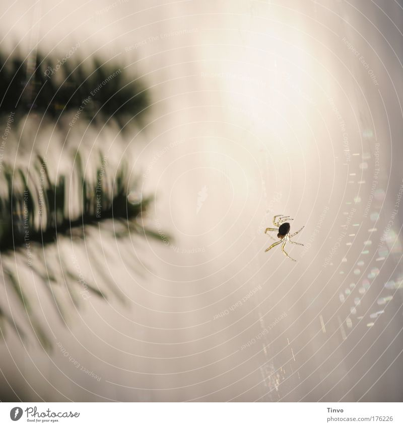 Animal Small Work and employment Wait Net Catch Hang Crawl Build Smart Spider Spider's web Diligent Fir branch Popular belief Spin