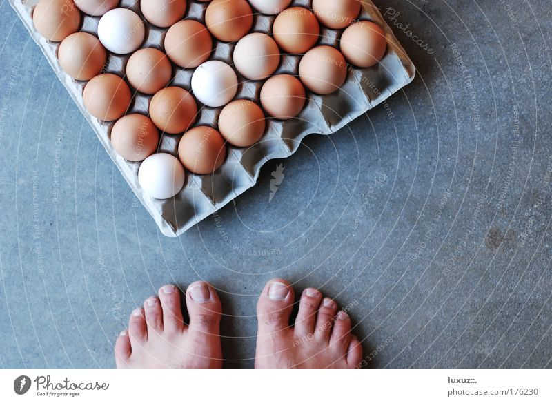 Hen-Egg-Problem Feet Eggshell Fragile Objective Project Ask Action Logic Philosophy Moral Copy Space right Neutral Background Bird's-eye view Barrier Barefoot