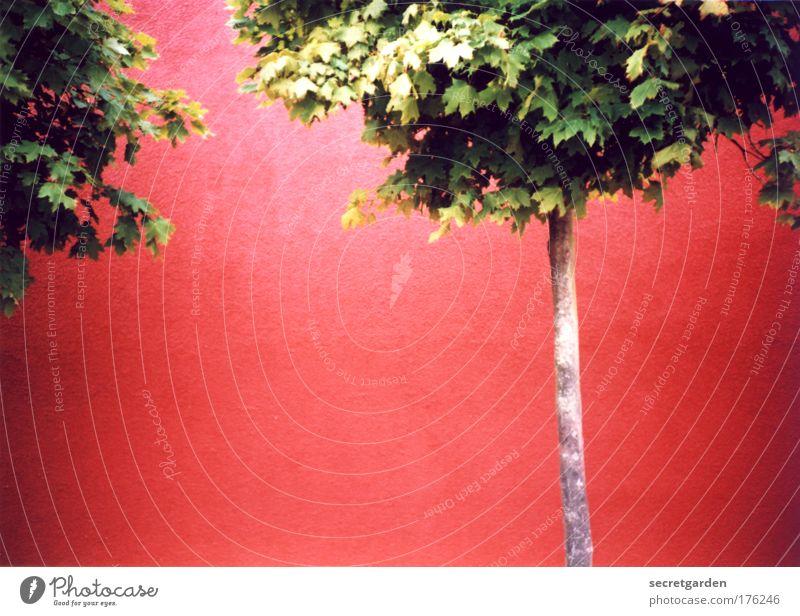 Nature Tree Green Red Summer Wall (building) Garden Wall (barrier) Building Power Design Environment Facade Empty Fresh Growth