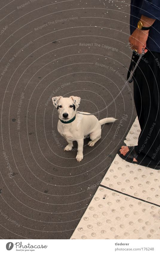 White Loneliness Animal Gray Dog Communicate Observe Whimsical Pet Optimism