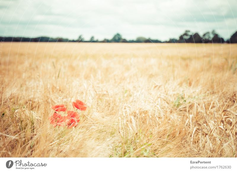 poppy seed week Environment Nature Landscape Plant Sky Clouds Summer Autumn Climate Climate change Weather Beautiful weather Flower Blossom Agricultural crop