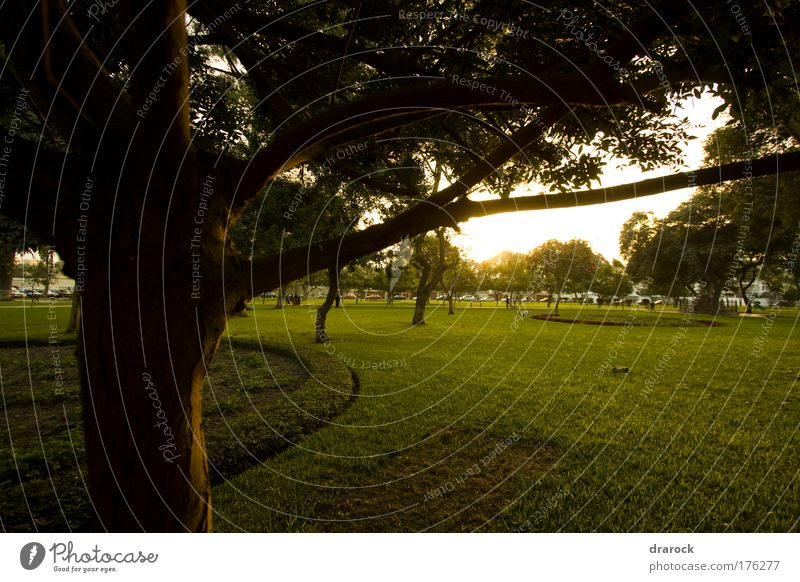 Green view Exterior shot Deserted Twilight Silhouette Sunlight Wide angle Looking away Environment Nature Landscape Plant Tree Grass Garden Park Lima Peru