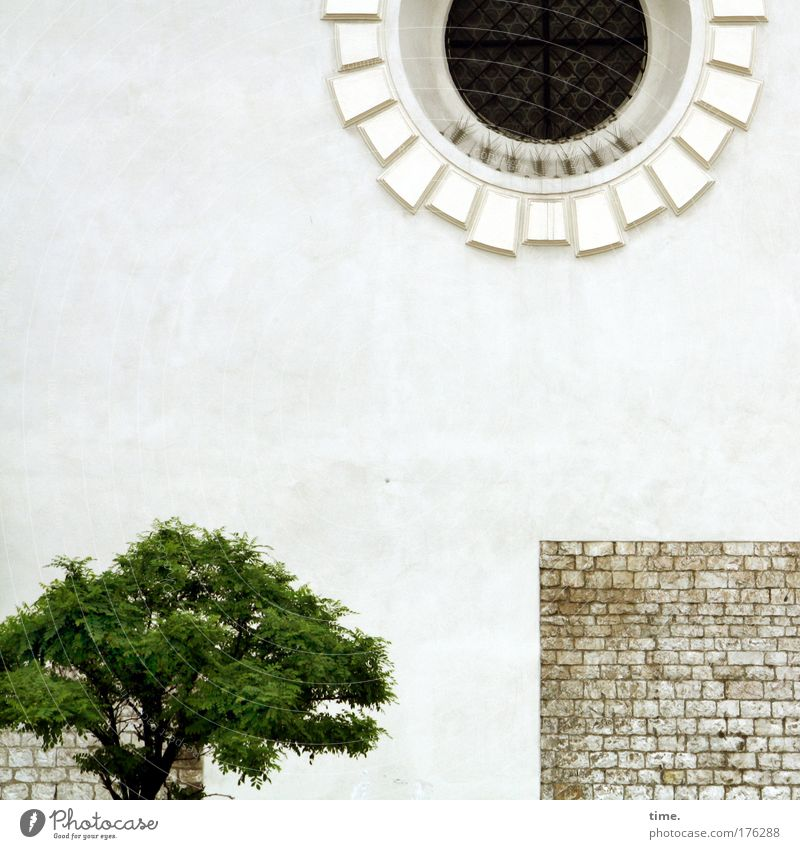 Tree Green Window Stone Wall (barrier) Small Tall Decoration Brick Historic Beautiful weather Ornament House of worship Philosophy Whitewashed