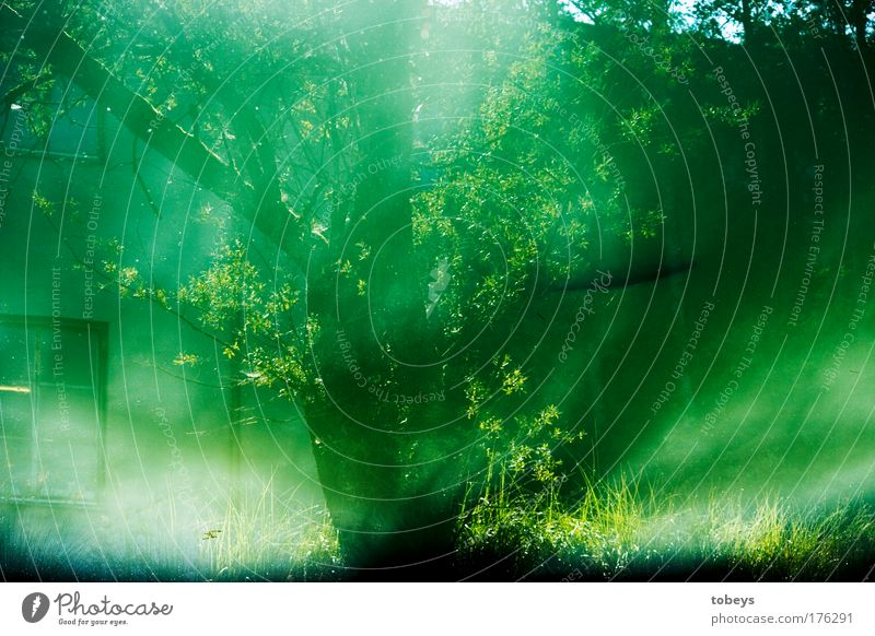 Green Water Tree House (Residential Structure) Window Coast Dream Bushes Fish Branch Surrealism Pond Abstract False
