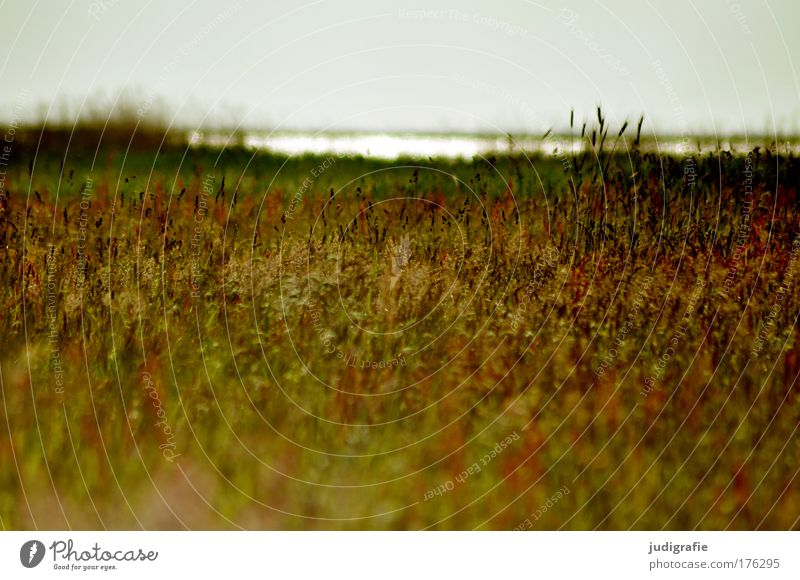 Meadow at the Bodden Colour photo Exterior shot Deserted Day Environment Nature Landscape Plant Water Sky Summer Grass Coast Baltic Sea Lake Natural Beautiful