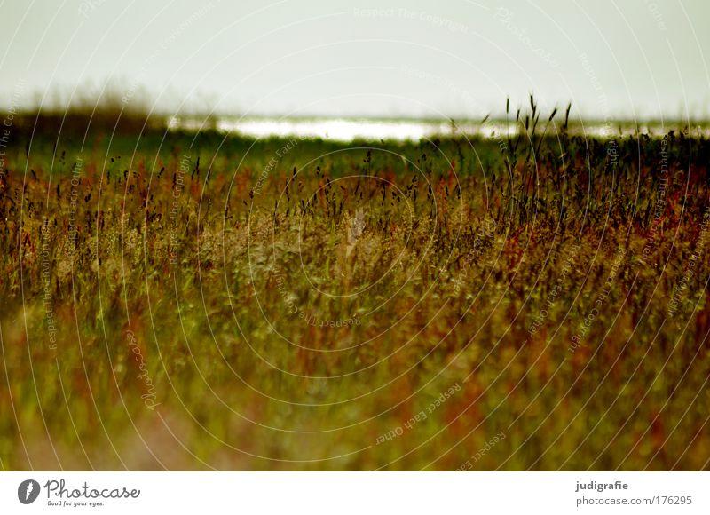 Nature Water Beautiful Sky Plant Summer Meadow Grass Sadness Lake Landscape Coast Environment Romance Wild Natural