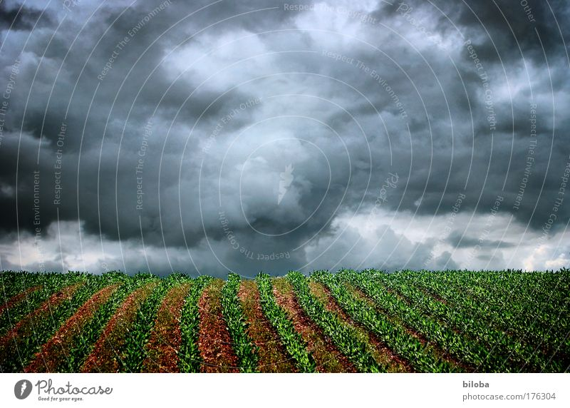 In the middle of the storm Colour photo Exterior shot Pattern Structures and shapes Deserted Copy Space top Day Light Shadow Contrast Deep depth of field