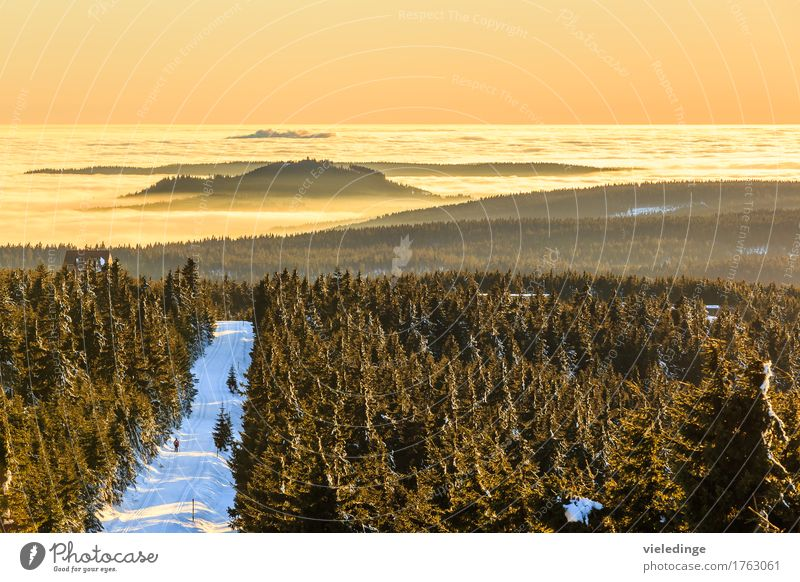 Vacation & Travel Tree Landscape Far-off places Winter Forest Mountain Snow Freedom Leisure and hobbies Fog Trip Europe Saxony Winter sports Winter vacation