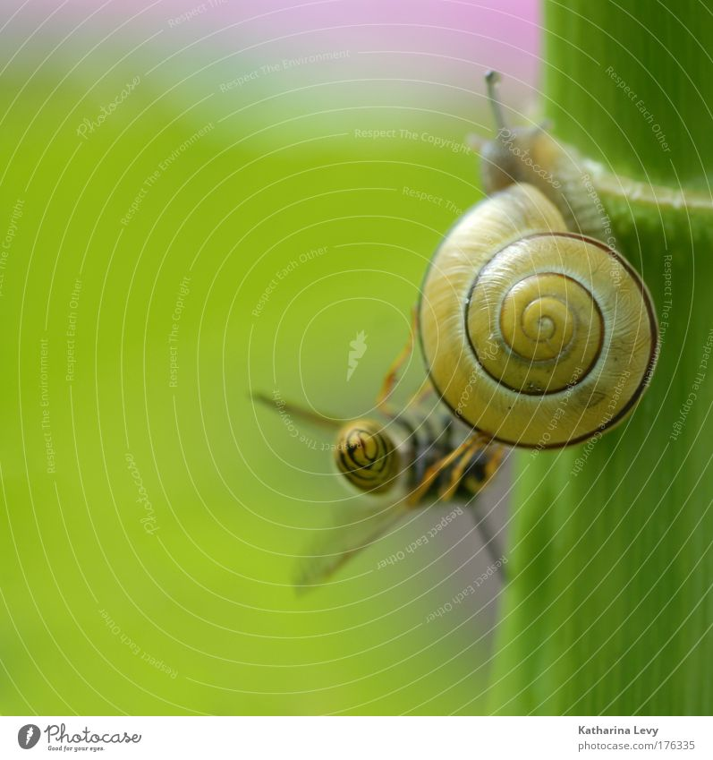 Green Plant Animal Yellow Life Friendship Together Small Authentic Pure Wild Touch Curiosity Stalk To hold on Bee