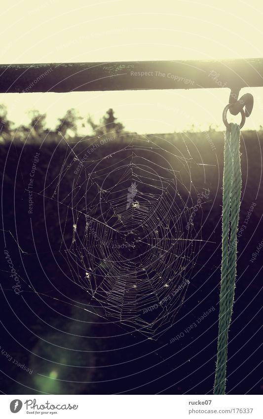 Fear Esthetic Threat Net Creepy Disgust