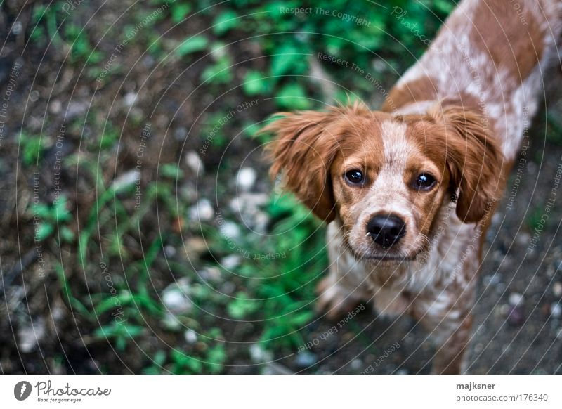 Dog Green White Beautiful Animal Happy Brown Baby animal Wait Happiness Success Stand Hope Animal face Near Trust