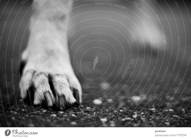 paw Black & white photo Exterior shot Deserted Copy Space right Day Shallow depth of field Worm's-eye view Nature Places Street Animal Pet Dog Paw 1 Discover