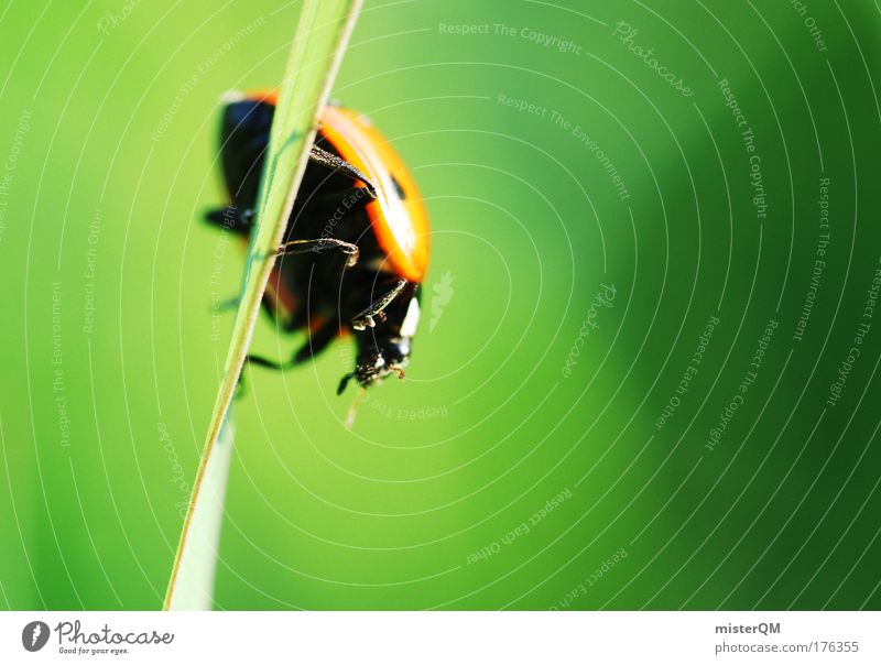 Nature Green Animal Environment Meadow Grass Small Earth Weather Perspective Search Climbing Discover Environmental protection Beetle Crawl