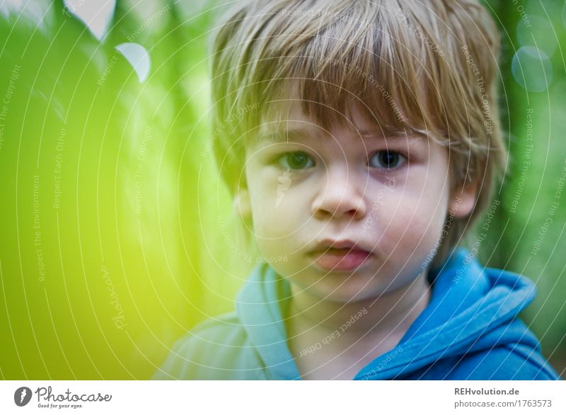 Human being Child Nature Blue Green Forest Face Environment Natural Boy (child) Small Hair and hairstyles Masculine Blonde Infancy Cute