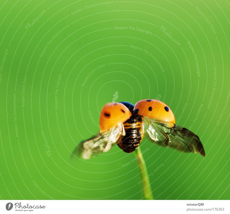 Summer Animal Small Art Flying Beginning Future Wing Technology Insect Isolated Image Easy Departure Beetle Career Organic farming