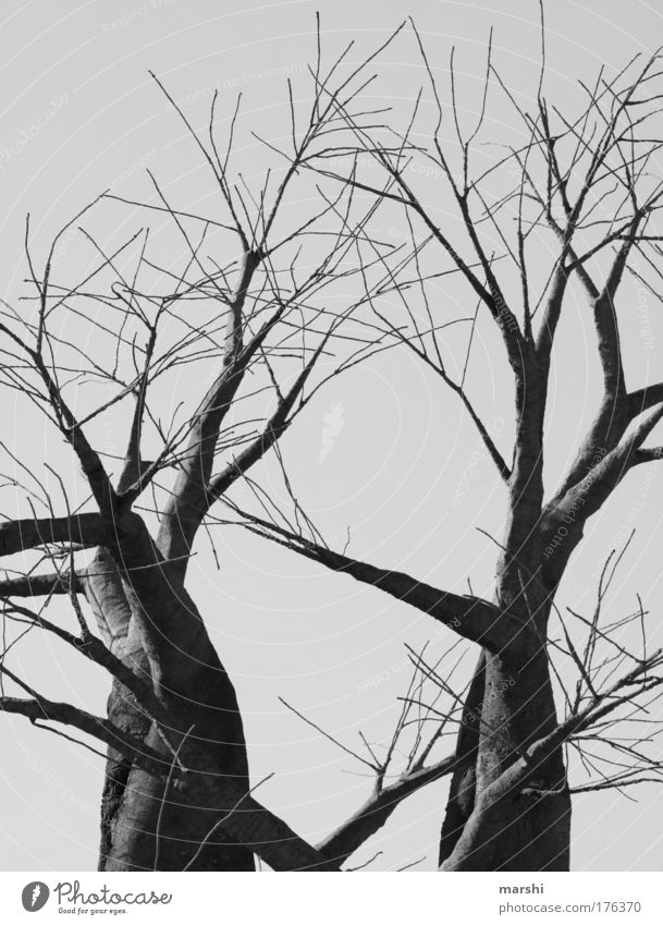 dark existence Black & white photo Exterior shot Environment Nature Autumn Winter Plant Tree Old Threat Large Creepy Gray Fear Dark Branch Eerie Branched