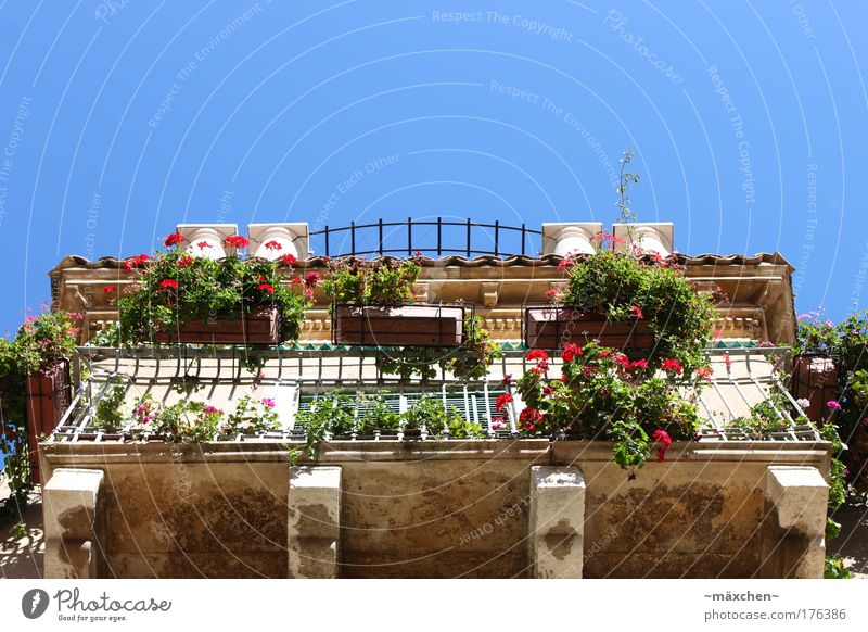 Beautiful Old Sky Sun City Green Blue Plant Summer House (Residential Structure) Wall (building) Wall (barrier) Building Sicily Architecture