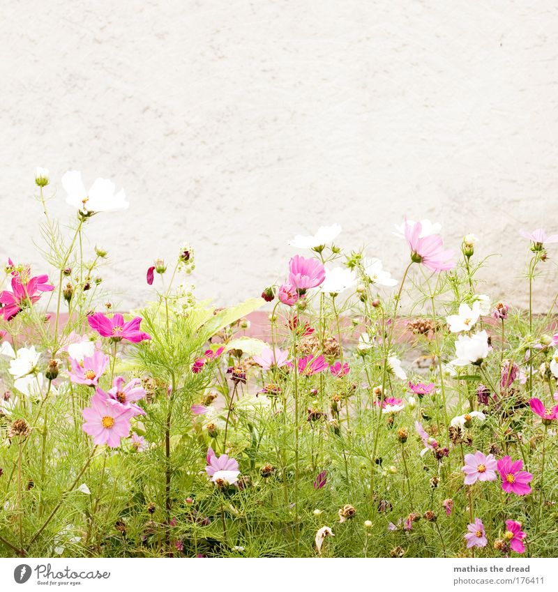 Nature Beautiful White Flower Plant Summer Animal Meadow Blossom Grass Spring Garden Park Landscape Contentment Small