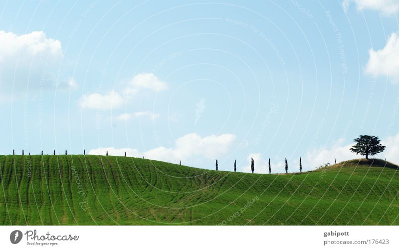 Nature Sky Tree Green Blue Plant Summer Clouds Meadow Landscape Line Field Environment Horizon Climate Italy
